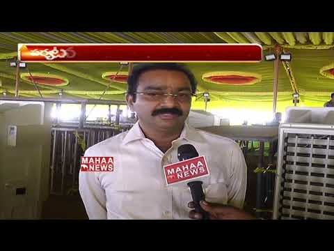 Face To Face With TDP Senior Leader Srinivasa Rao Over Dharma Porata Deeksha | Mahaa News