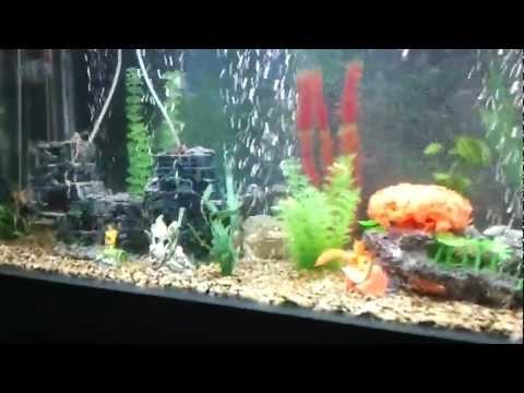 حوض سمك العمودي - The most beautiful aquarium