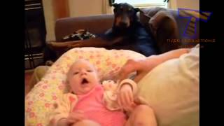 Funny dogs jealous of babies   Cute dog & baby compilation