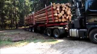 Scania 164G V8 480 - małe problemy z wyjazdem z drewnem.... :)