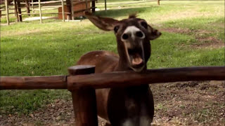 CRAZY DONKEY SOUND! (Top 5 Donkey Sounds)