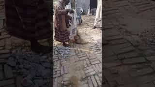 Real Ichhadhari NaagNagin caught in the house