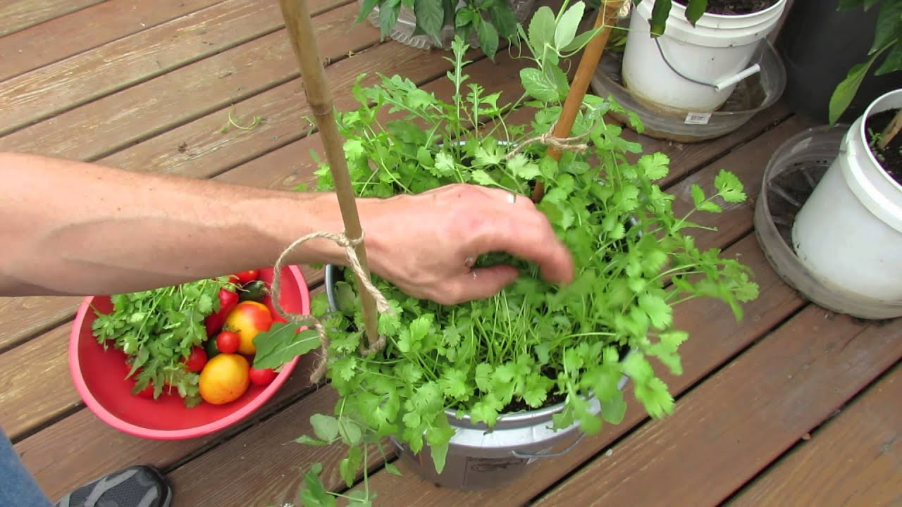 Image Result For How To Start A Kitchen Garden In Pots
