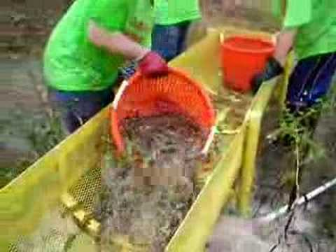 Shrimp Harvest