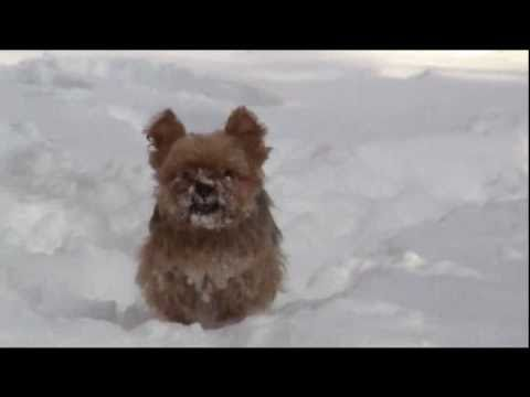 Cute Puppies Playing in Snow Cute Puppy Playing in Snow