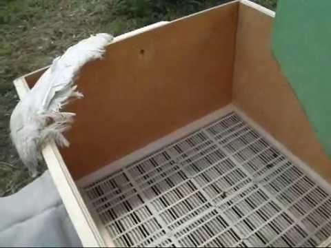Пчеловодство. Посадка роя в улей через РР