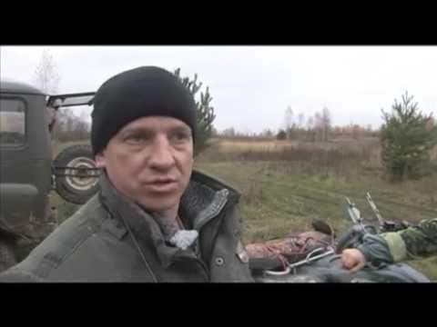Натаска и притравка западно сибирской лайки на кабана.