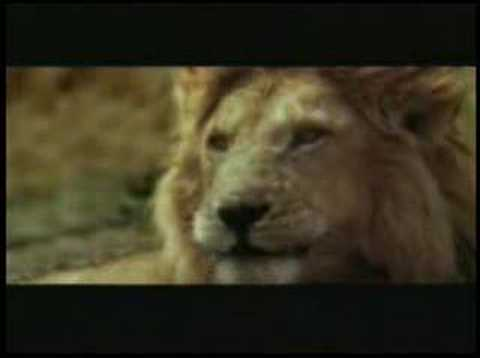 Funny African Lion Hunting in Masai Mara Video