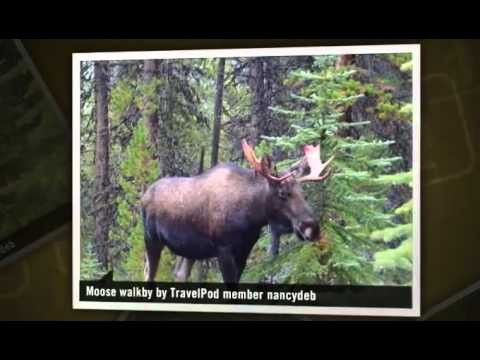 Best wildlife spotting yet - Jasper, Canada (wildlife spotting canada, caledonia lake jasper)