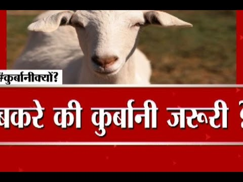 Big Debate: Why sacrifice animals on Bakrid?