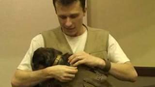 Cães precisam de companhia constante; veja dicas do Dr. Pet