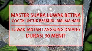 MASTER SUARA LUWAK BETINA - COCOK UNTUK BERBURU - DURASI 30 MENIT
