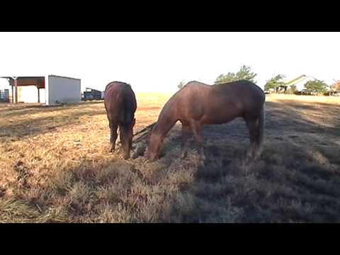 When Releasing Pressure Teaches - What To Do After Your Horse Bucks You Off - Connecting Lessons