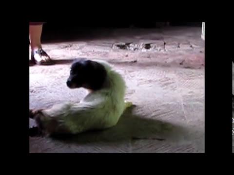 maltrato animal en curepto