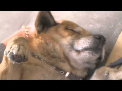Massage From The Dogs Guardian Spirit video