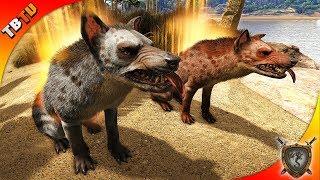 🚩 HYAENODON TAMING AND FARMING PROFESSION! Ark: Ragnarok Survival Plus E5 [Live Stream]
