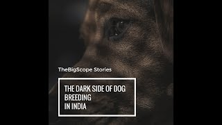 The Dark Side of Dog Breeding in India