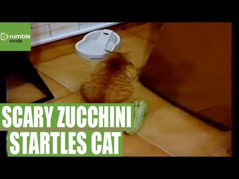 ふと置いてある物体にパニックする猫