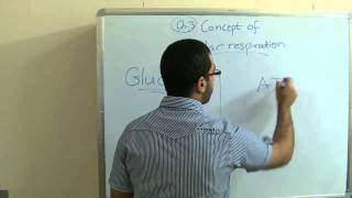 Biology - Chapter 3 - Respiration - part 1 (Cellular respiration) - Abdallah Reda El Sayed