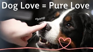 Dog Love = Pure Love | Happy Valentine's Day from Rover.com