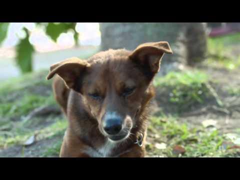 """Donacion de organos """"El hombre y el perro"""""""