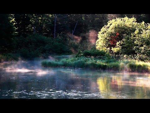 Entspannung Naturgeräusche - Vogelstimmen im Wald