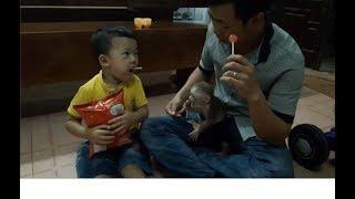 Baby Monkey Doo Eats Lollipops - Funny Animals