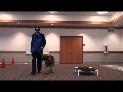 Kobi (American Alsatian) Boot Camp Level III. Dog Training