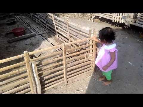 Anak Kecil Bermain di Kandang Bebek