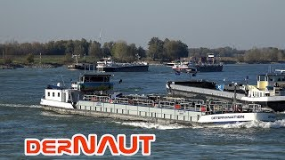 Rheinpegel auf Rekordtief | Rush Hour auf dem Rhein | Rush Hour at River Rhine | 4K