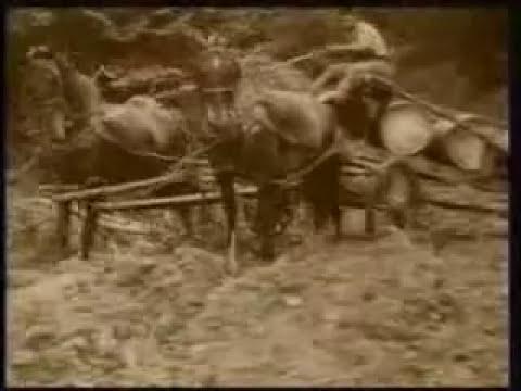 Historia del Petroleo Parte 1