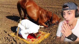 حصان يركع ويسجد مثل البشر ( كيييف كذا ) !!