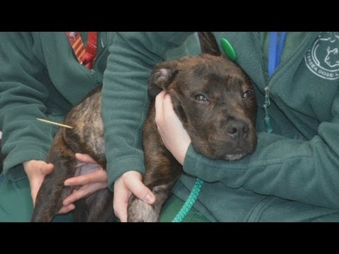 Dog swallows kebab skewer: Patrick's story of survival at Battersea Dogs & Cats Home