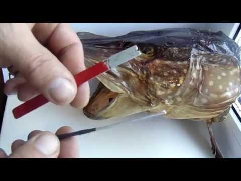 Дипы для рыбалки своими руками