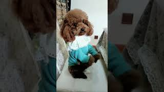 Look at these cute and funny puppies dogs 1838