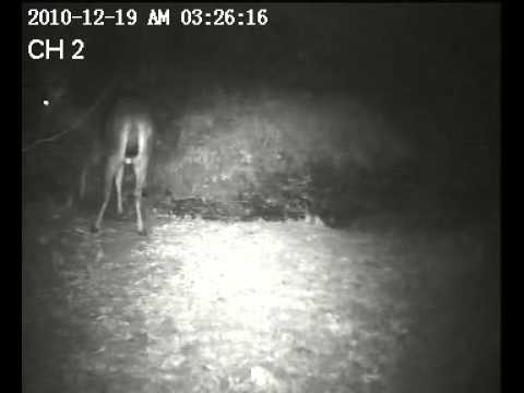 Sambar Stag caught on 2 cameras in the forest of www.tigertrails.in