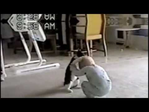 Pelea entre beb y un gato