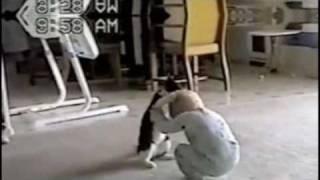 La pelea más dulce entre un bebé y un gato