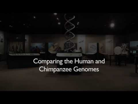Richard Dawkins: Comparing the Human and Chimpanzee Genomes - Nebraska Vignettes #3