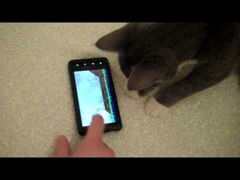 Cute Kitten Plays Angry Birds Apple Android App