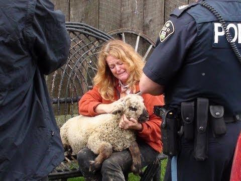 Lamb - Killing Is Breed