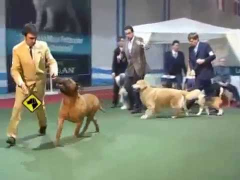 Criadero DIMAHO en Perros en acción LEATHERNECK RATED TRIPLE X en Asociación Canina Tandilense