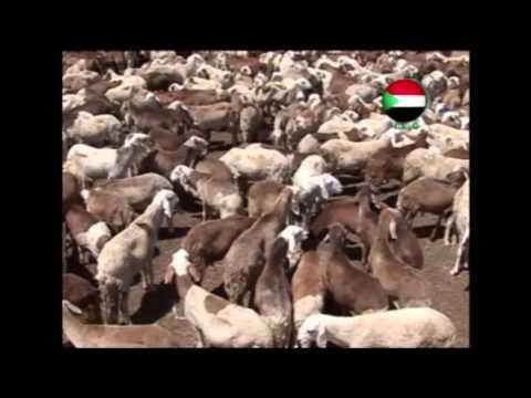 Sudan Travel - Travel Men's Obsession