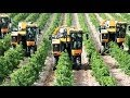 Pellenc Optimum Grape Harvester