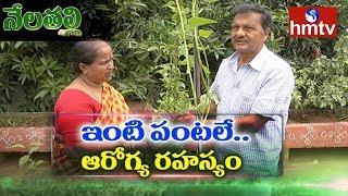 మేడ మీద తోటల్లో కాసిన పంటలే వీరి రోజూ ఆహారం | Success Story Of Farmer Couple | Terrace Farming |hmtv