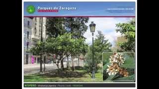Plaza Basilio Paraíso de Zaragoza - Parques de Zaragoza