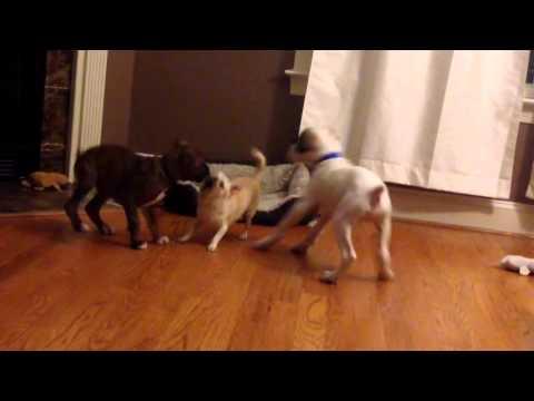 チョットどきなさいよ!と2匹の犬がベットを追い出してしまうマンガみたいな光景