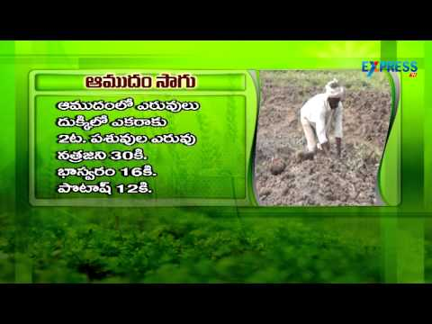 How to cultivate Castor - Paadi  Pantalu