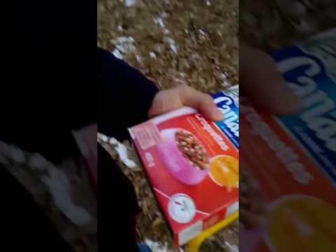 Un jeune de cité nourrit des chats errants