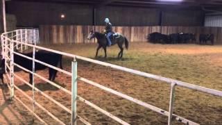 Nova- Jared Lesh Cowhorses